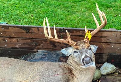 2015-Buck-5