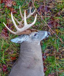 2015-Buck-6