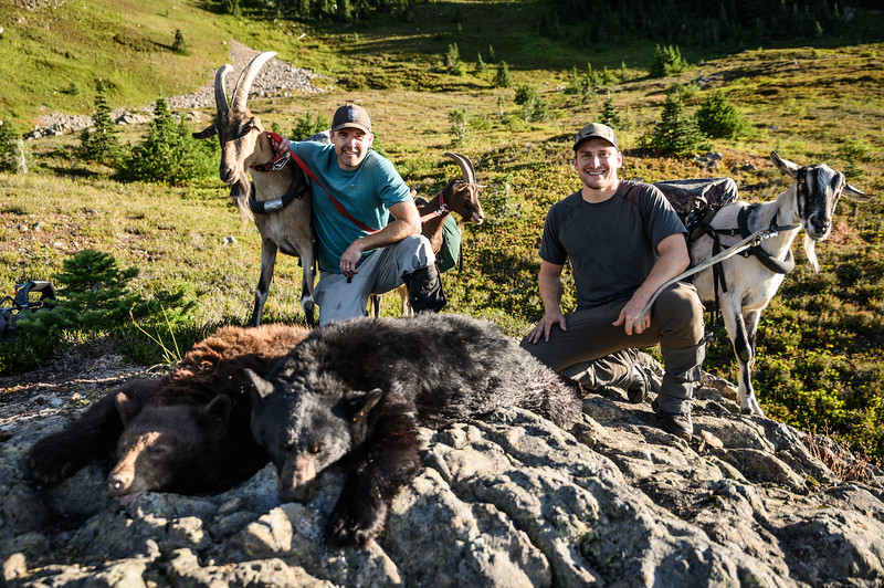 Double bear kill with pack goats