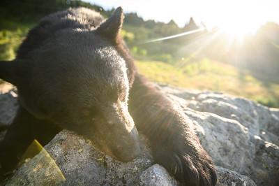 Shane's bear