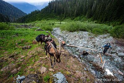 Alpine creek crossing.