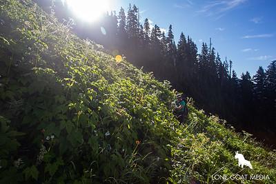 Classic Western Washington alpine meadows
