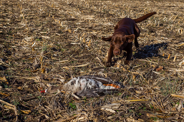 Hunting, waterfowl hunting