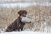 Hunting, waterfowl hunting, duck hunting