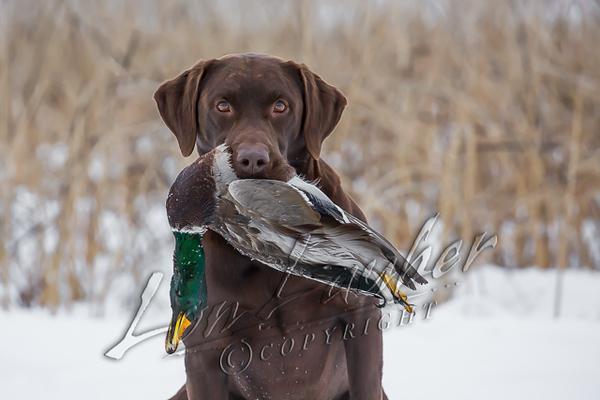 Hunting, waterfowl hunting, duck hunting