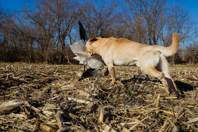 Hunting, waterfowl hunting