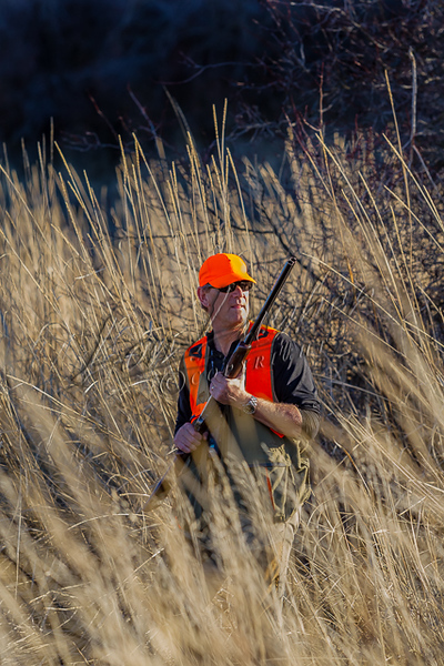 Hunting upland birds, area with multiple species