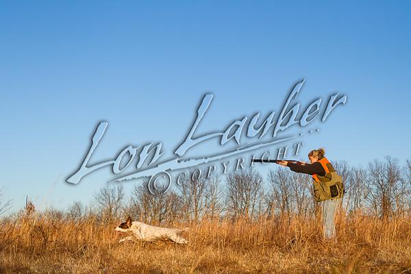 Hunting upland birds, bobwhite quail hunting