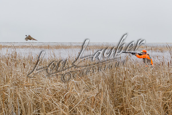 Hunting upland birds, pheasant hunting, winter, snow, cold