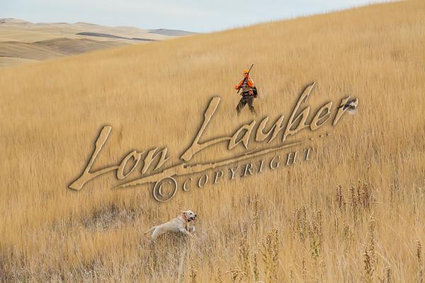 Upland bird hunting, pheasant hunting,