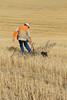 Hunting upland birds, pheasant hunting,