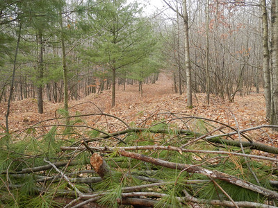 A view from my stand to the SW.