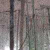 """I have an upside down video problem with my new phone - but ignore the video and listen and you will hear a Barred Owl doing his """"who cooks for you"""" song."""