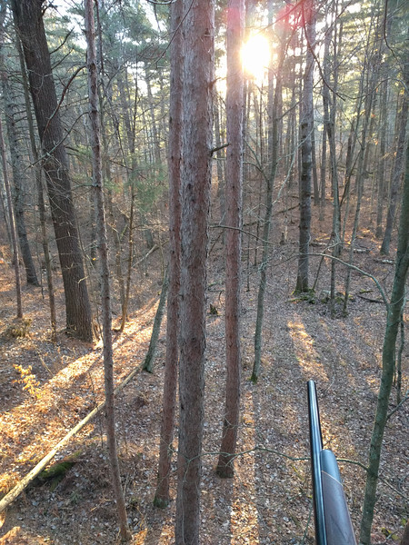 The rising sun on opening morning. Took about 20 minutes to put my stand up in the same tree as last year.