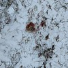 Found blood! Tracked it a ways through the snow.