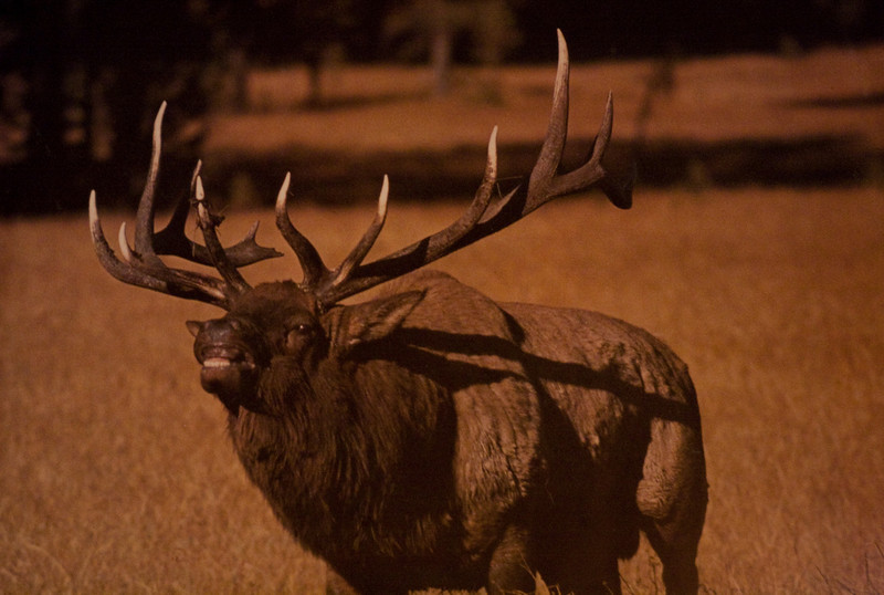 This is what we were hoping to find. A nice photo of a large bull elk in our cabin.
