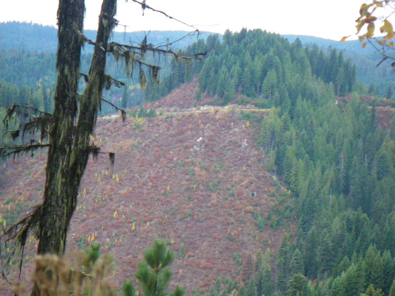 Looking across at a old logging road I had walked earlier that day.