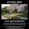 Page two of the ad.  This is a lawn in California that was destroyed by feral hogs.  How would you like to wake up in the morning to this?