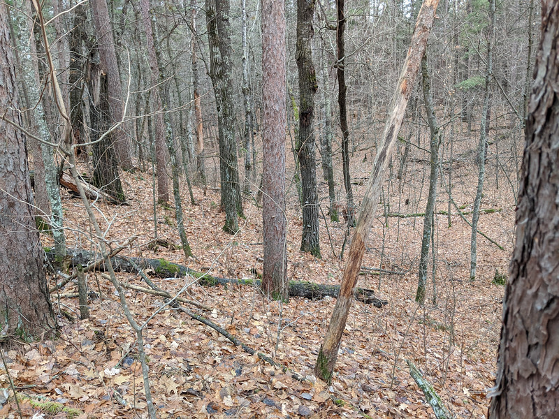 A new ground blind area I called Little Mocha Valley.