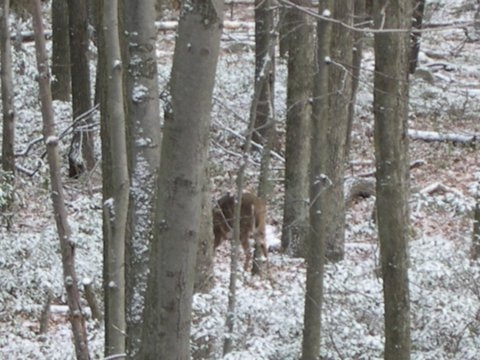 Scraggly lil' deer that wandered around my stand in Carbon County for 15 minutes.  December '05