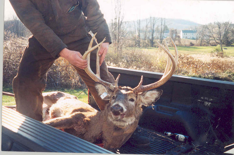 The 'Almost' buck.  He was 30 yards from my archery stand in 2002 before wandering off.  Got killed later that year in rifle season.
