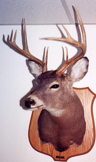 1994 8-pointer from Tioga County