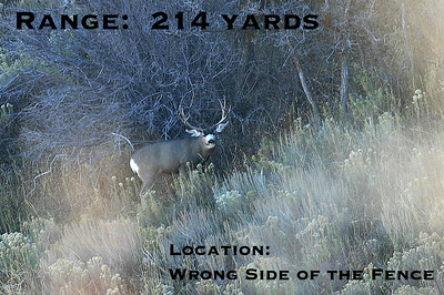 Out of Range Buck