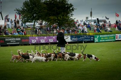 Lincs show hound parade 2014.