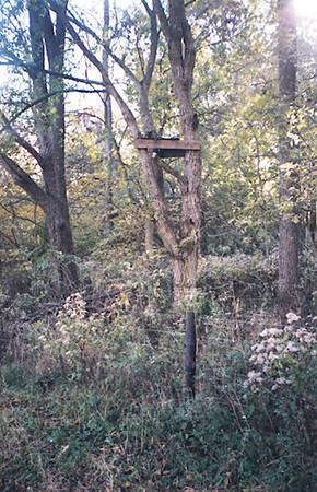 fenceline stand