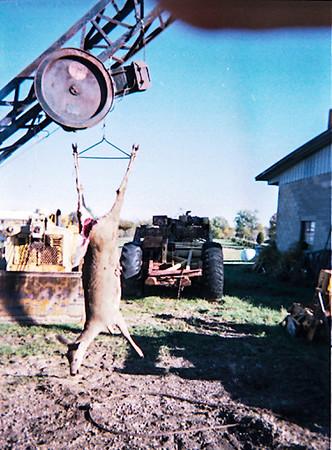 hanging doe