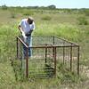 Slim baits the pig trap.