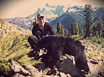 Washington fall black bear