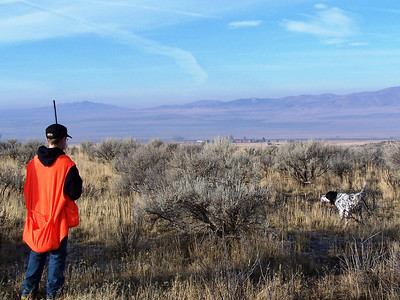 This Llewellin setter points at a pheasant it found in the brush at a youth pheasant hunt held at the Douglas/Sorenson Walk-In Access Area.  Photo by Alan Peterson
