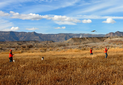 Three youth and a dog watch a flushed pheasant sail out of gun range.  Photo taken on 11-8-08 at Huntington Wildlife Management Area by  Brent Stettler, Utah Division of Wildlife Resources.