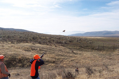 A young hunter draws a bead on a pheasant flushed during a youth pheasant hunt at the Douglas/Sorenson Walk-In Access Area.  Photo by Alan Peterson