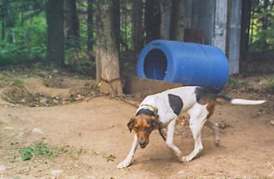 bear dog-2