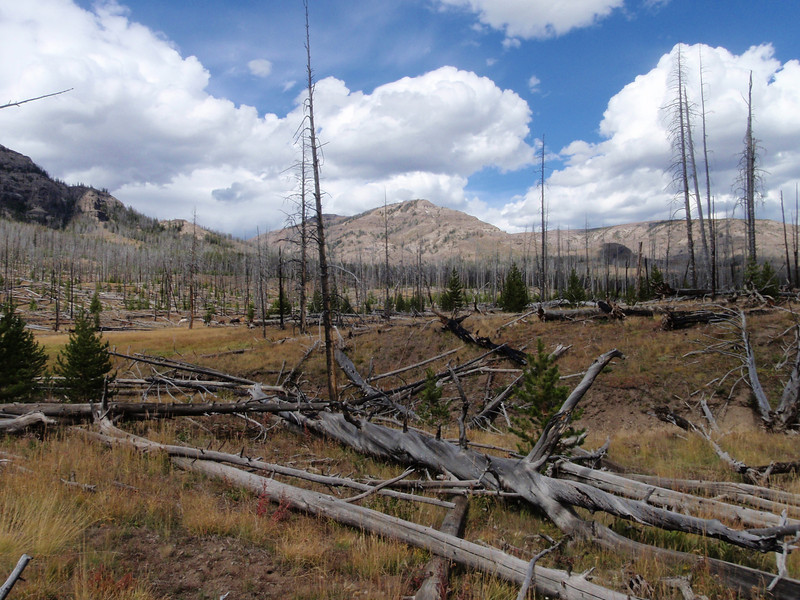More yellowstone fire damage from '88