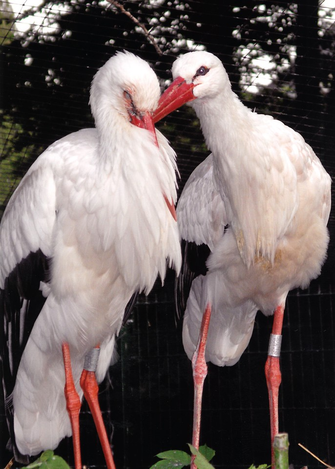"""Love Birds"" Parc L'Orangerie, Strasbourg, France (c)2008"