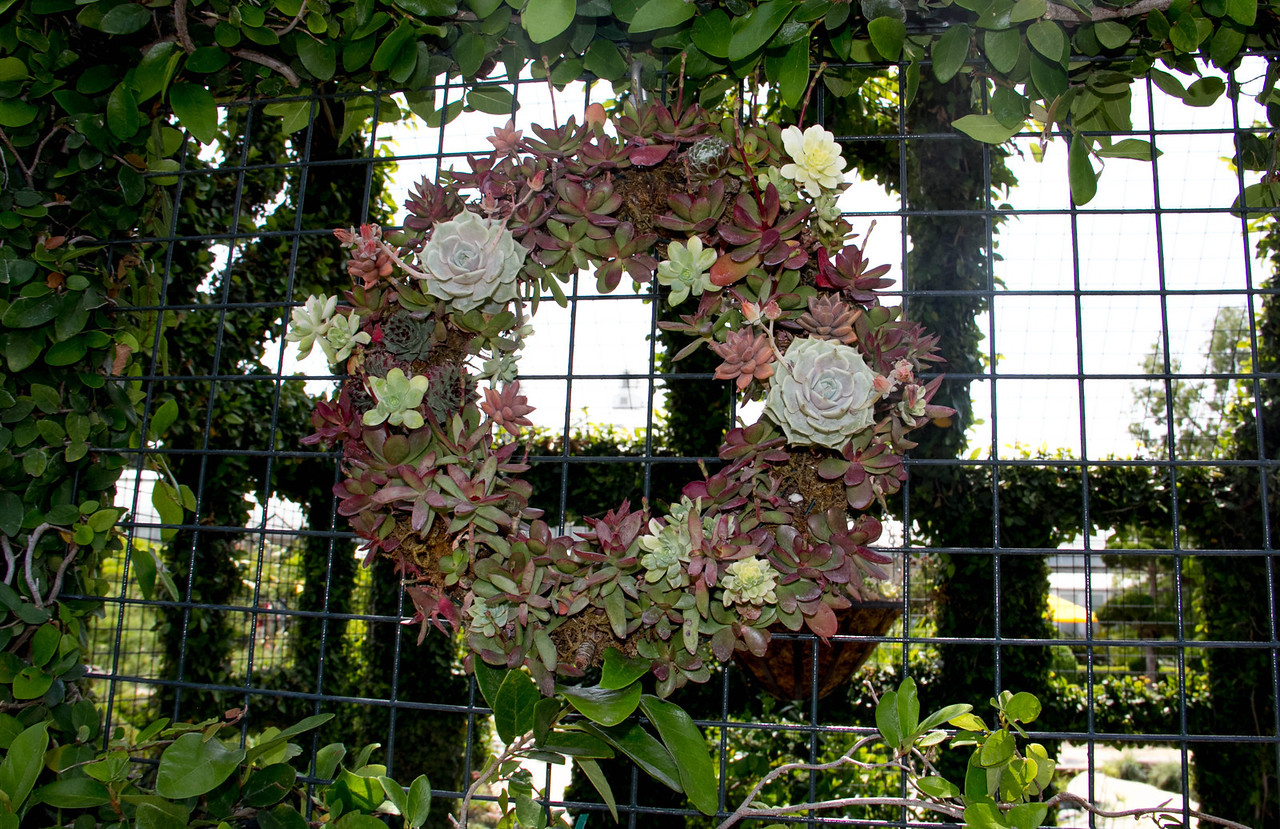 Gorgeous crown in the Children's Garden