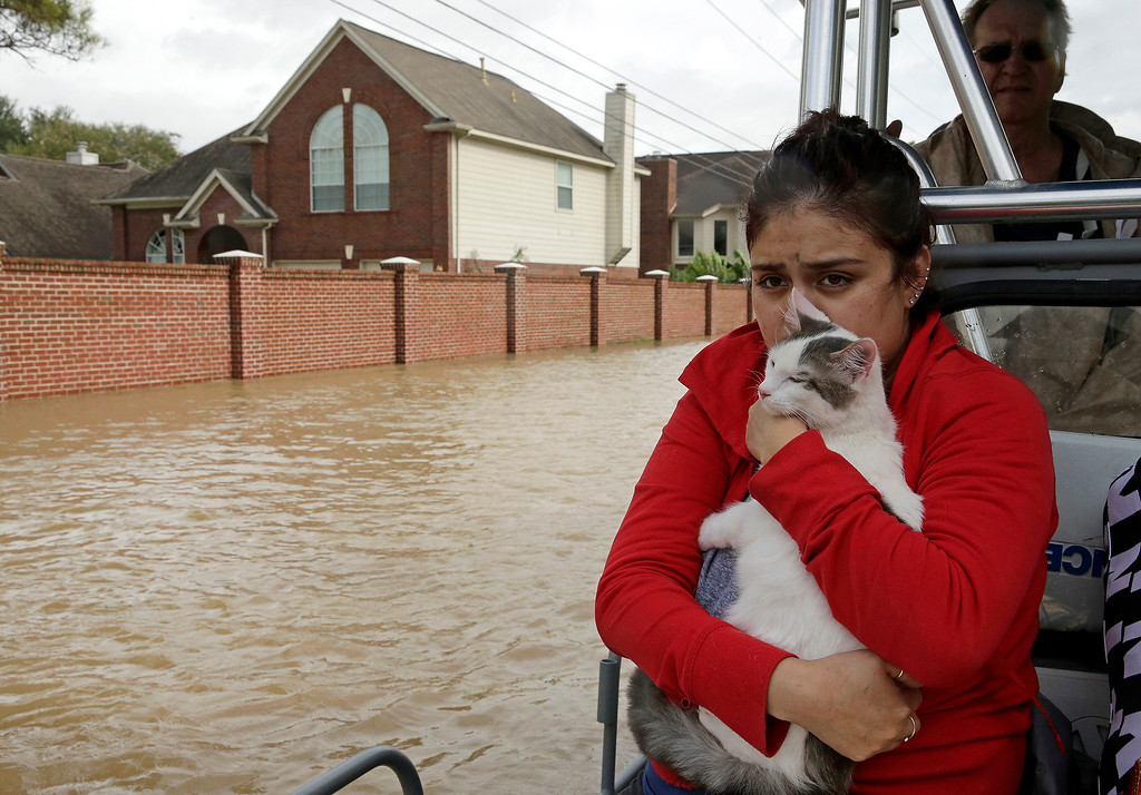 . Jannett Martinez holds her cat Gigi as she rides a boat out of her neighborhood which was inundated after water was released from nearby Addicks Reservoir when it reached capacity. AP Photo/Charlie Riedel