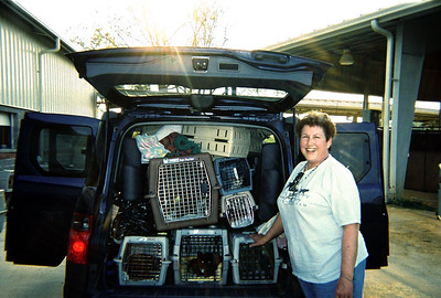 "Barbara says ""It was like solving a Rubik's Cube, but we got all 20 cats in the car!"""