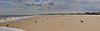 _DSC6399 Crop 2-Point Pleasant Beach