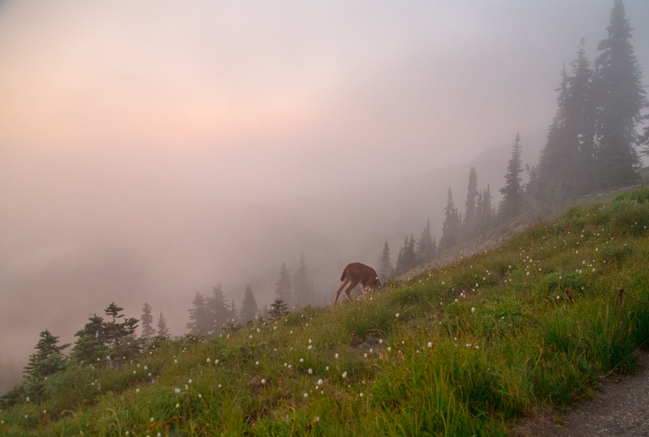 Deer Grazing in the Fog