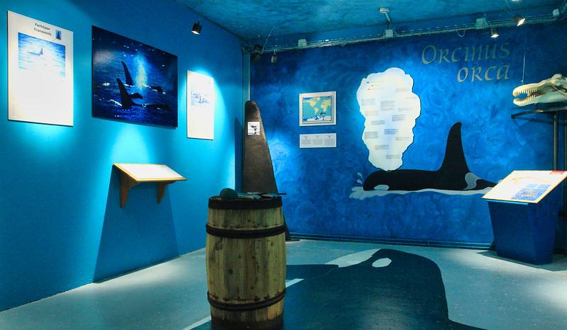 Χούσαβικ (ΙΣΛΑΝΔΙΑ). Το Μουσείο Φαλαινών