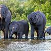 Elephants in Hwange National Park, Zimbabwe.