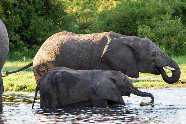 Elephants in Hwange National Park, Zimbabwe.