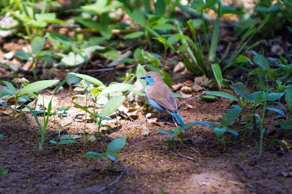 In Hwange National Park, Zimbabwe.