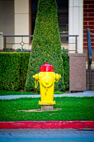 You're looking very symmetrical there, yellow fire hydrant!