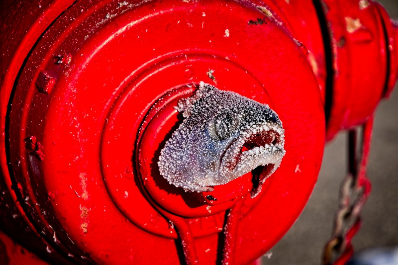 Fish heads, fish heads, rolly polly frosty fish heads. Frankie and I saw this fish head stuck to the hydrant while walking around Daybreak