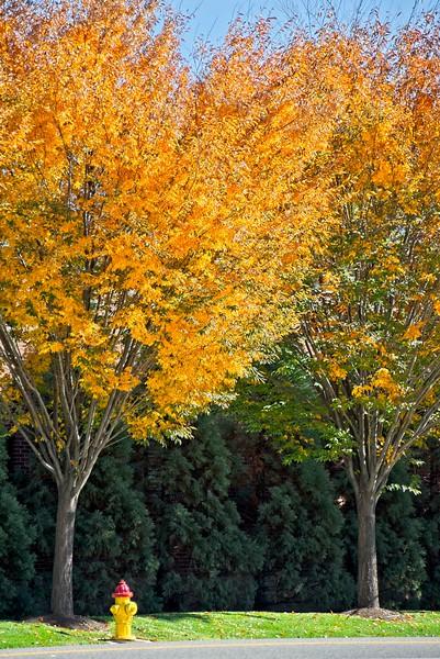 In the Fall in Downtown Salt Lake City, Utah